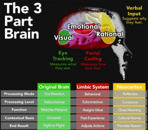 The three part brain